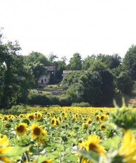 22 La Voute & Sunflowers