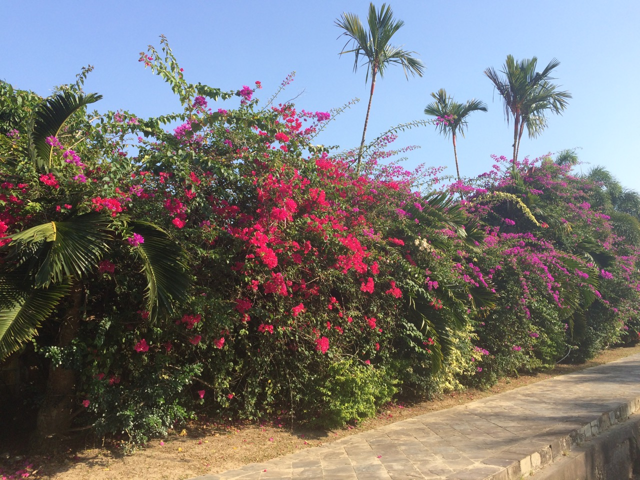 Beautiful Blooms And Plants Of Malaysia Top Tourist