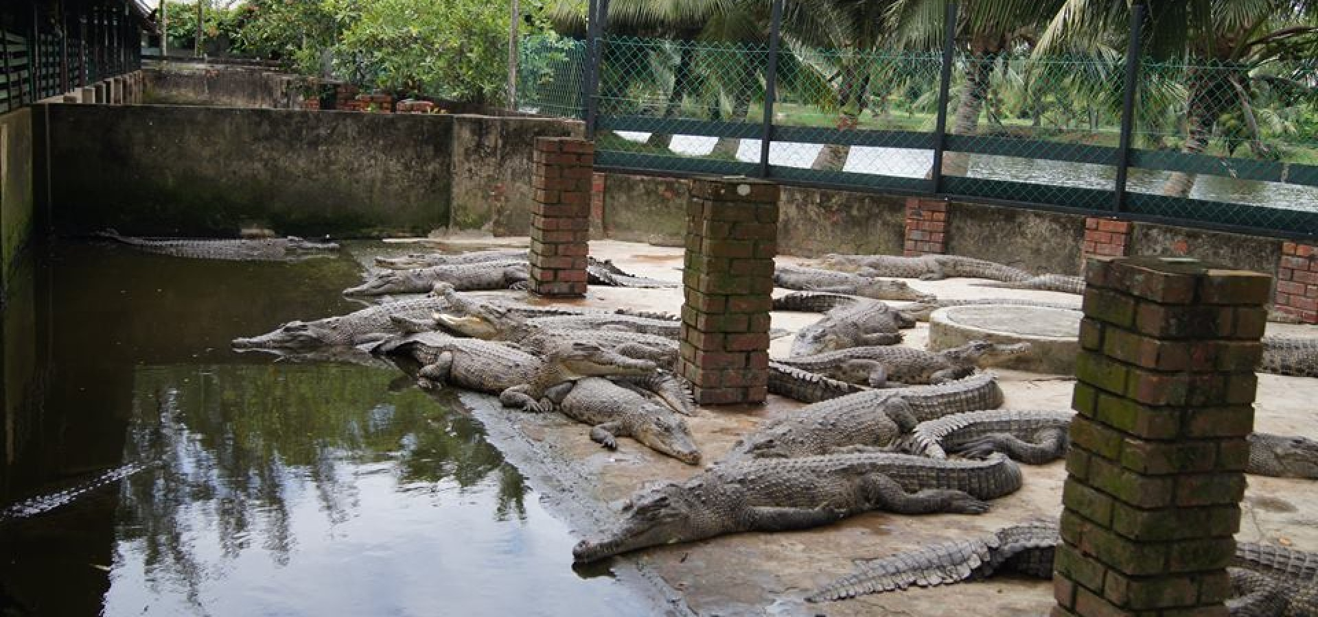 Miri Crocodile Farm And Mini Zoo Top Tourist