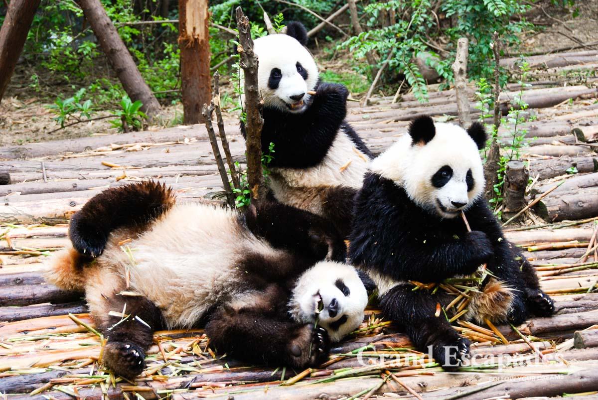 Highlights In Amp Around Chengdu Top Tourist