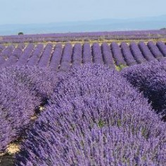 Provence Confidential