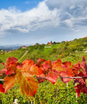 visitdolenjska_vineyards-1350x900
