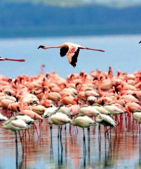 lake-manyara-birds-1